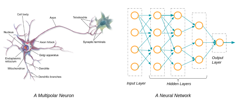neural network vs neuron